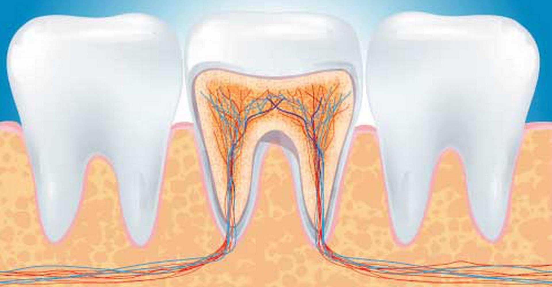 Endodonzia Centro Dentale Parmense